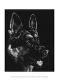 Canine Scratchboard I