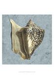 Stonewashed Shells VI