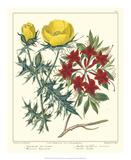 Gardener's Delight VII