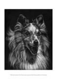 Canine Scratchboard VIII