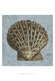 Stonewashed Shells IV
