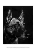 Canine Scratchboard V