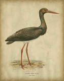 Vintage Heron I