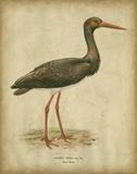 Vintage Heron I
