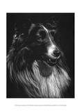 Canine Scratchboard VII