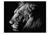 Wildlife Scratchboards I Reproduction d'art par Julie Chapman