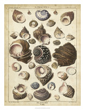 Turban Shells