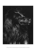 Canine Scratchboard VI