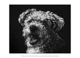 Canine Scratchboard XXV