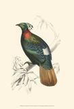 Birds of Costa Rica II