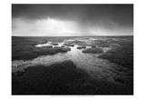 Scale Moor