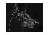 Canine Scratchboard XVI Reproduction d'art par Julie Chapman