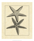 Antique&Deckle Vintage Starfish I