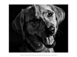 Canine Scratchboard XXIII