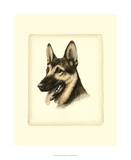 Danchin German Shepard
