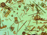 Diatoms  Farlow Herbarium  Harvard University
