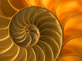 Nautilus Shell  South Pacific Ocean