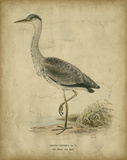 Vintage Heron II