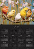 Five Colourful Canaries Sitting on a Branch with Blossoms