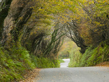 A Narrow Country Lane Near Camelford  in Cornwall  United Kingdom