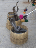 Snake Charmers Baskets Containing Cobras  Jaipur  India