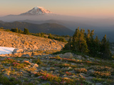 Mt Adams from Timberline in the Goat Rocks Wilderness with Heather  Paintbrush  and Lupine