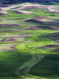 The Palouse Region of Eastern Washington Is a Major Wheat-Producing Agricultural Area