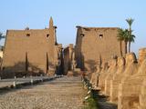 Avenue of Sphinxes  Luxor Temple  Luxor  Egypt