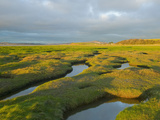 Saltmarsh at Hest Bank  Morecambe Bay  Lancashire  United Kingdom