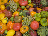 The Tomato Festival in Santa Rosa  California  Local Fruit and Vegtables