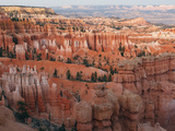 Hoodoos in Bryce Canyon National Park  Utah  USA