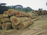 Logging the Rainforest  Gabon