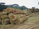 Logging the Rainforest  Gabon