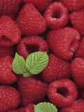 A Harvest of Raspberries