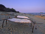 Cassava Drying in the Sun on the Shore of Lake Malawi  Malawi