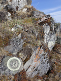 Rock Lichens  Brooks Range  Gates of the Arctic National Park  Alaska  USA