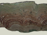 Composite Stromatolites from the Snowslip Formation in Glacier National Park