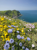 Wildflowers Near Hartland Point in Devon  United Kingdom