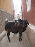 Street Scene at Nubian Village on Elephantine Island  Aswan  Egypt