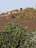 Recycling Yard and Organic Waste into Mulch