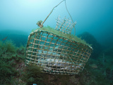 Fish Trap over a Coral Reef  Cap De Creus  Costa Brava  Spain