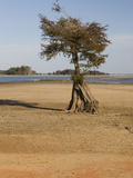 Dry Lake Bed of Lake Marion in the Santee Cooper Lake System During the Fall Drought of 2009