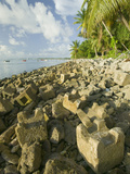 Erosion Control on a Tropical Beach