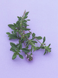 Thyme  a Popular Culinary Herb High in Vitamin K and Minerals