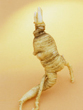 Ginseng Root (Panax Quinquefolius) Used in Oriental Alternative Medicine