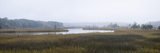 Tidal Salt Marsh with Smooth Cordgrass (Spartina Alterniflora) and Black Needlerush