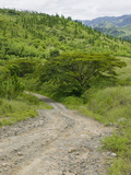 Dirt Road into the Remnants of a Rainforest Near Bukaya in the Fiji Highlands