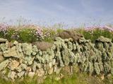 Drystone Wall on the Edge of Farm Field at Baggy Point in Devon  United Kingdom