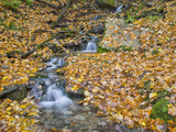 Small Stream with Fall Leaves  Malanaphy Springs State Preserve  Winneshiek County  Iowa  USA
