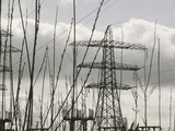 Willows Being Grown for Biofuel in Front of Electricity Pylons Near Penrith  United Kingdom